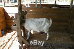 Goat, Sheep, Cow 1/2 Gallon 1 Teat Milking Machine Dansha Farms